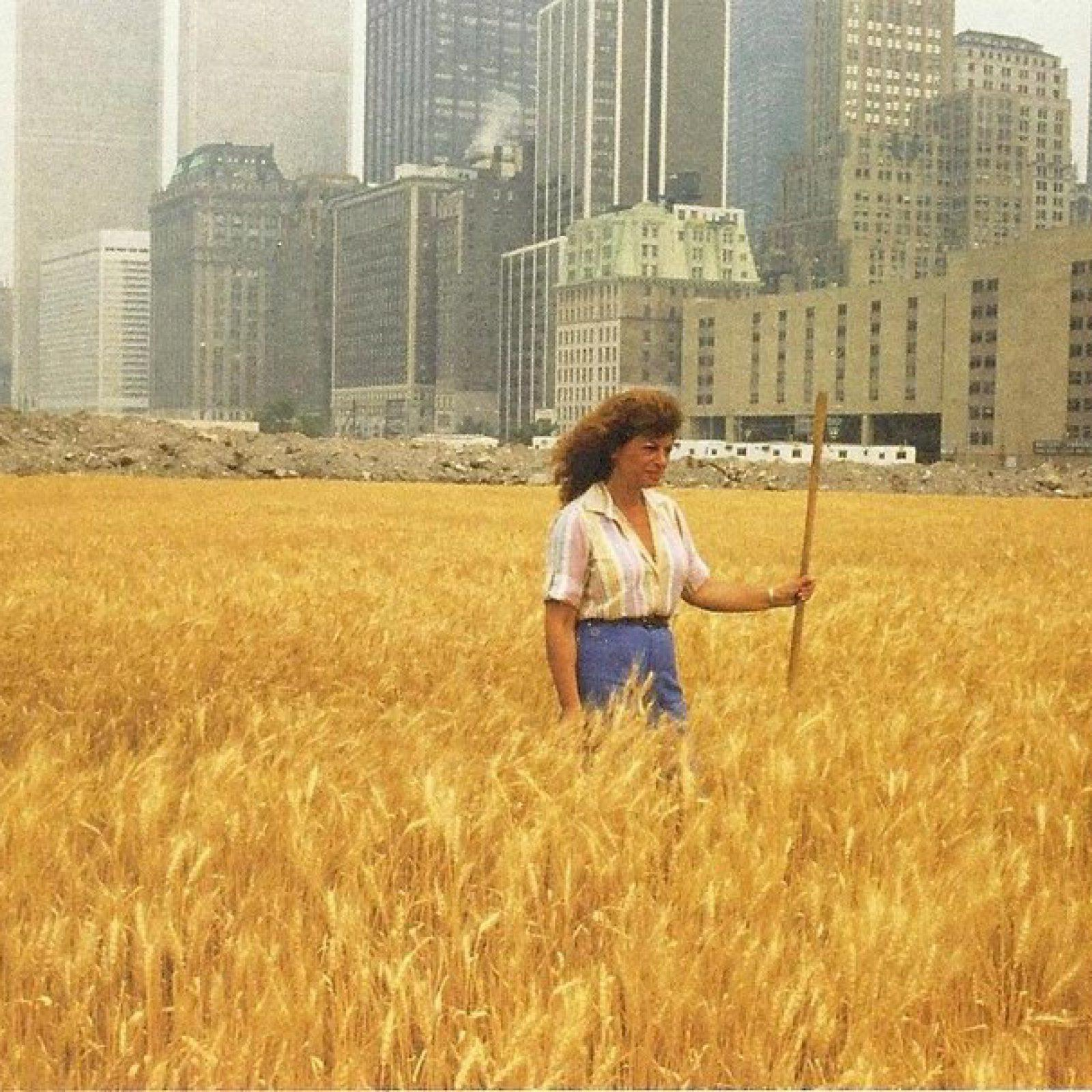 Agnes Denes, Wheatfield – A Confrontation Battery Park Landfill, Downtown Manhattan, Summer, 1982, collection particulière